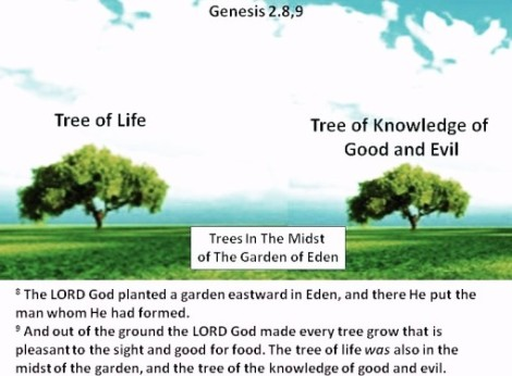 tree_of_good_and_evil